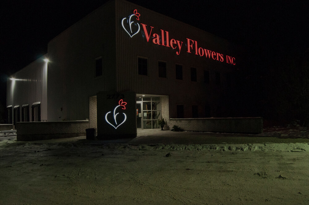 Valley Flowers LED